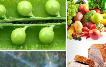 n-fresh-organic-produce