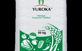 yuroka